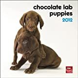 Labrador Retriever Puppies, Chocolate 2012 Mini Calendar