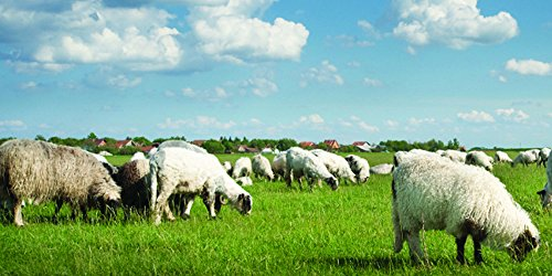 - Nature's Seed 1 Acre Great Plains Sheep Pasture Blend