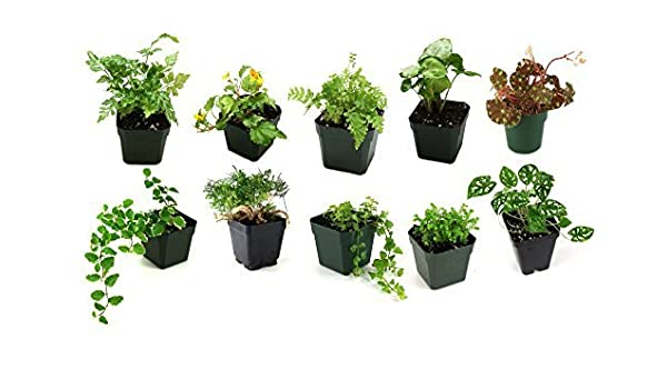 Amazon Com Classroom Terrarium Plant Bundle 10 Plants By Josh S