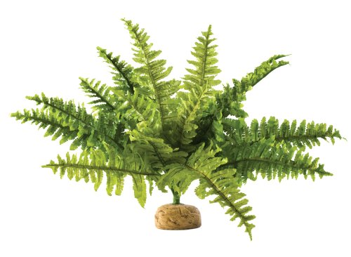Boston Fern Terrarium Plant