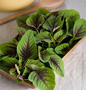 Amazon.com : David's Garden Seeds Leafy Greens Red Leaf Vegetable ...