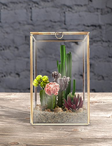 MyGift Clear Glass Plant Terrarium w/Brass Metal Frame/Tabletop Curio Case/Shadow Box