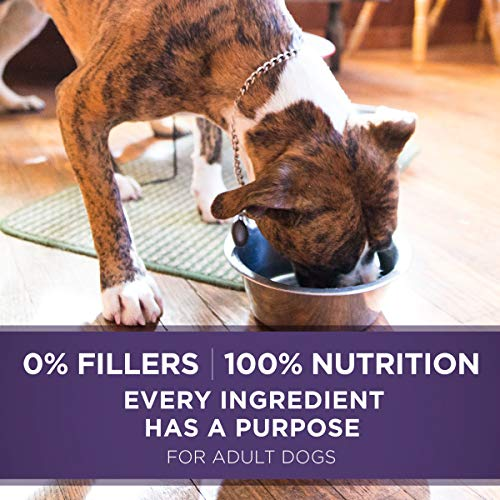 Purina ONE Natural Senior Pate Wet Dog Food, SmartBlend Vibrant Maturity 7+ Turkey & Barley Entree - (12) 13 oz. Cans