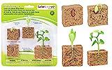 plant model - Safari Ltd  Life Cycle of a Green Bean Plant