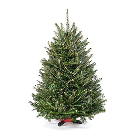 3 ft tabletop premium grade real christmas tree stand included - 3 Ft Christmas Tree