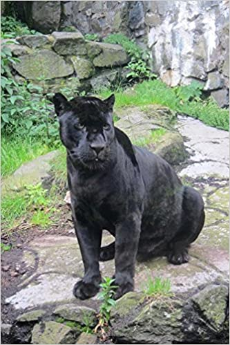 Lovely Amazon.in: Buy Black Jaguar Animal Journal Book Online At Low Prices In  India | Black Jaguar Animal Journal Reviews U0026 Ratings