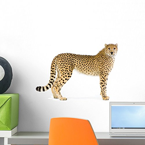 Standing Adult Cheetah Wall Decal by Wallmonkeys Peel and Stick Graphic (18 in W x 12 in H) WM212011