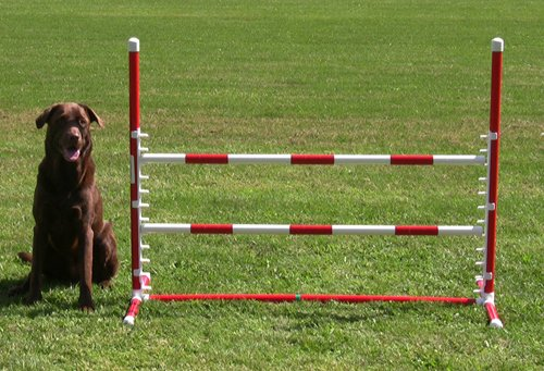 Affordable Agility Red Competition Adj Jump by Affordable Agility