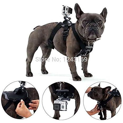 Accesorios BoldscriptTM cinturón escapular tráeme perro arnés pechugona montaje para gopro Hero 4 3 + 3 2 para SJ4000 OS243: Amazon.es: Electrónica