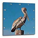 Birds – Pelican – 10×10 Wall Clock (dpp_605_1) For Sale