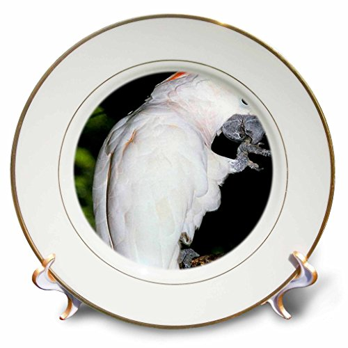Birds - Moluccan Cockatoo - 8 inch Porcelain Plate (cp_930_1)