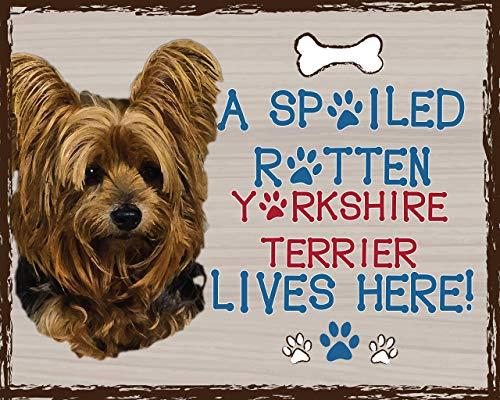 (Yorkie-Dog Poster Print- 10 x 8