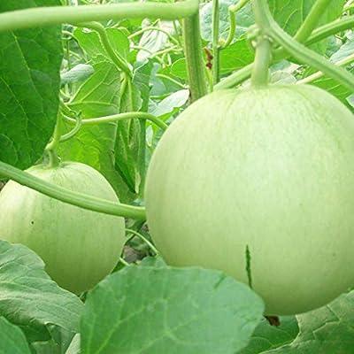 Fanthee Muskmelon Melon Seed,500Pcs Sweet Melon Seeds Easy Grow Delicious Juicy Fruit Garden Plant Honeydew Melon Seeds: Sports & Outdoors