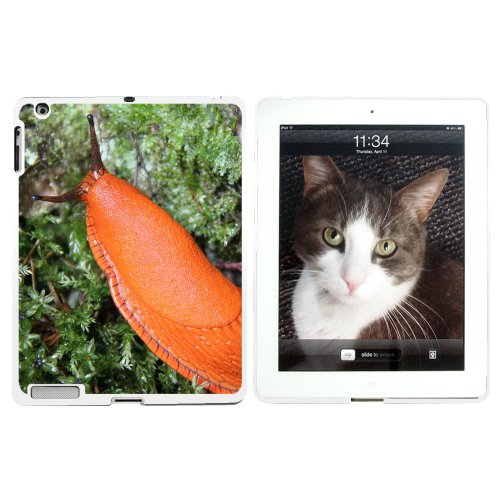 graphics-and-more-large-orange-slug-snail-mollusk-snap-on-hard-protective-case-for-apple-ipad-2-3-4-