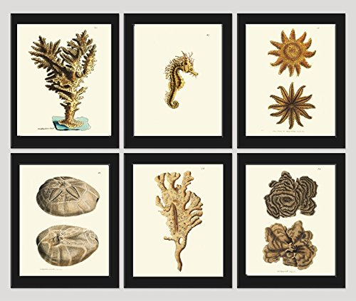 Coral-Set-of-6-Prints-Antique-Beautiful-Beige-Brown-Natural-Corals-Sea-Horse-Sea-Stars-Sand-Dollar-Ocean-Marine-Nature-Home-Room-Decor-Wall-Art-Unframed
