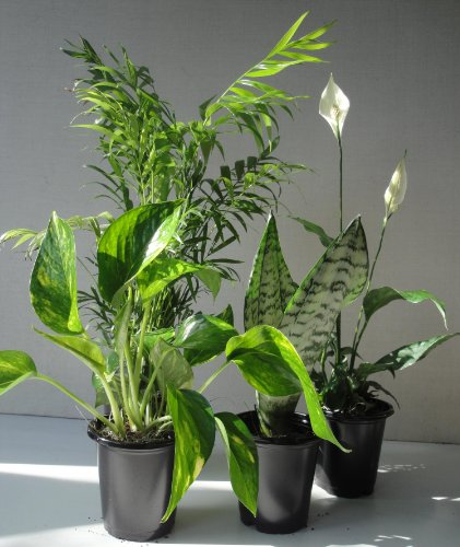 air purifying plants - 2