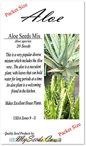 - 20 x Aloe Seeds Mix - Excellent House Plants succulent For Greenhouse, Indoor home - Includes ALOE VERA - By MySeeds.Co