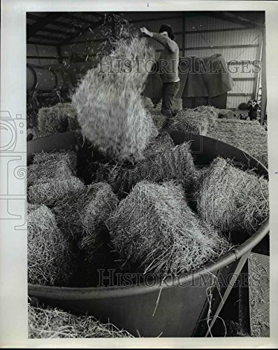 1973 Press Photo Grass-seed straw bales are tossed into shredder - orb54164