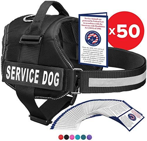 Industrial Puppy Service Dog