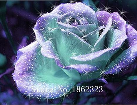 semilla de la planta de semillero flores de Rose caliente! 100 PC Plantas de rosas bonsai semillas de flores balcón semillas color de rosa