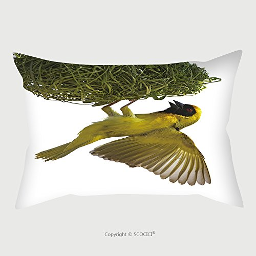 Custom Microfiber Pillowcase Protector Masked Weaver Hanging From Nest Against A White Background Ploceus Velatus South Africa 68663191 Pillow Case Covers Decorative (Wicker Patio South Africa Outdoor Furniture)