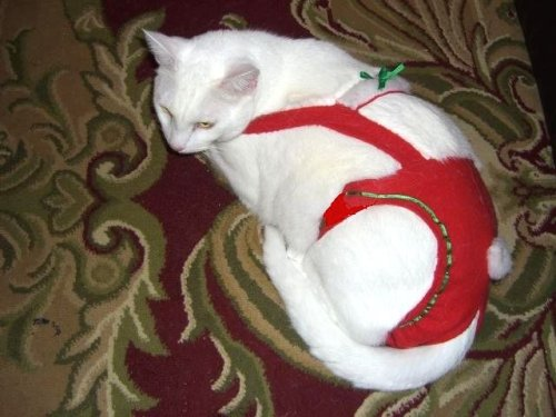 Joybies Red Festive Christmas Piddle Pants(tm) for Medium Cat Measuring 15 -17  From Collar to Base of Tail