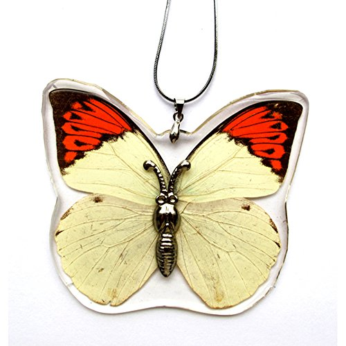 The Real Insect Co. Real Butterfly Necklace And Earring Set For Girls (Great Orange Tip)
