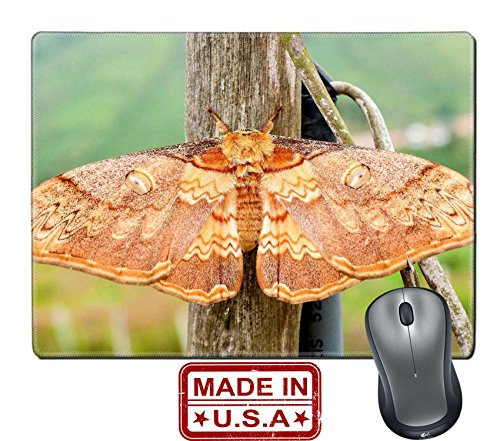 Liili Natural Rubber Mouse Pad Mat With Stitched Edges 9 8  X 7 9  Moth Night Butterfly In Nationalpark In Thailand Image Id 19157155