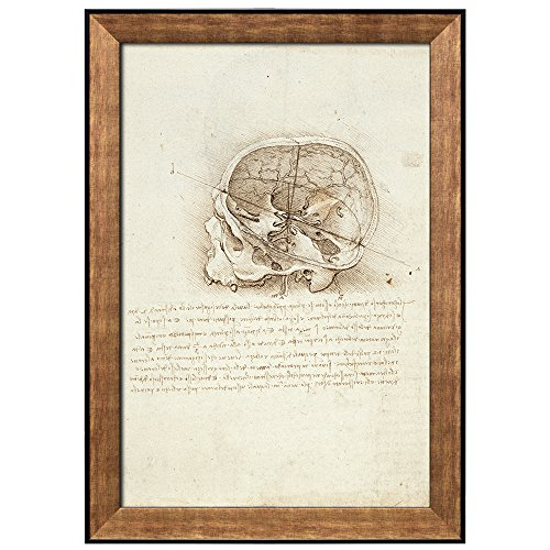 Anatomical Studies View of a Skull by Leonardo Da Vinci Framed Art
