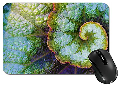 MSD Large Mouse Pad XL Extended Non-Slip Rubber Extra Large Desk Mat IMAGE 30199112 Rex Begonia Leaf The Rex Begonia is known for its large hairy colorful l Rex Slip