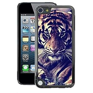 A-type Arte & diseño plástico duro Fundas Cover Cubre Hard Case Cover para Apple iPod Touch 5 (Tiger Vignette Filter Fur Roar Big Cat)