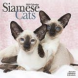 Siamese Cat Calendar - Calendars 2018 - 2019 Wall Calendars - Cat Calendar - Animal Calendar - Siamese Cats 16 Month Wall Calendar by Avonside