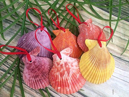 Glitter Variety Colorful Seashell Beach Christmas Ornaments, Set of (Glitter Seashells)