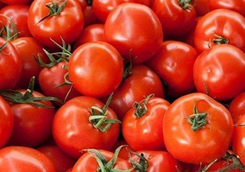 Bush Early Girl Hybrid Tomato Seeds Bush Type Plant 18 Inche Bulk 15 Seeds