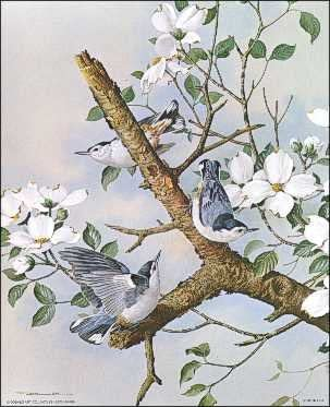 White Breasted Nuthatches Paper Tole 3D Kit 8x10 by DSC