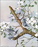 White Breasted Nuthatches Paper Tole 3D Kit 8x10
