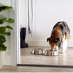AmazonBasics-Comedero-para-perro-acero-inoxidable-2-unidades