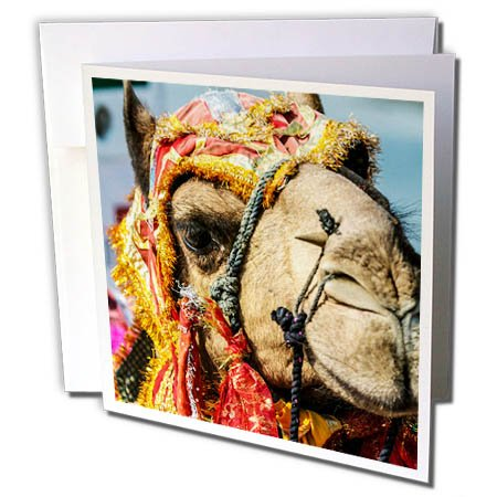 3dRose Danita Delimont - Camels - Decorated Camel, Diwali Festival of Lights, Udaipur, Rajasthan, India. - 6 Greeting Cards with envelopes (gc_257189_1) (Desert Festival Costume)