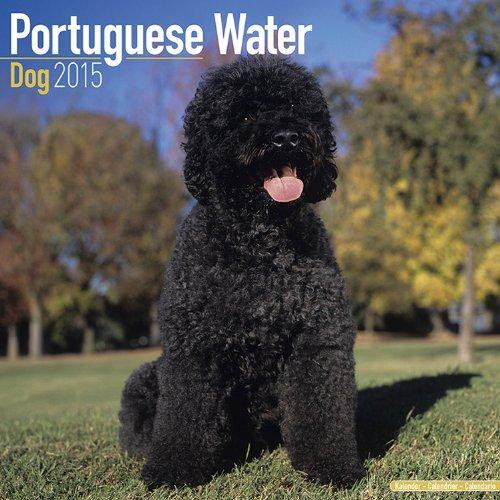 portuguese water dog calendar - 8