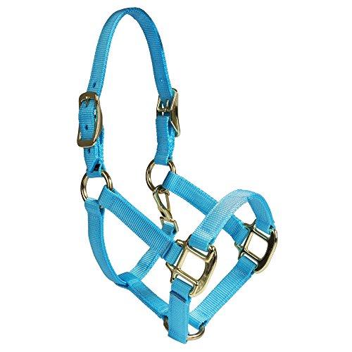 Intrepid International Nylon Miniature Horse Halter, Light Blue, - Walking Saddle Horse