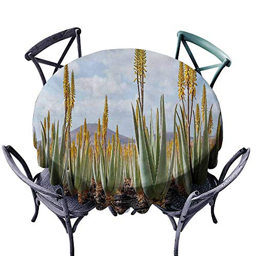 Lcxzjgk Polyester Tablecloth Plant Photo from Aloe Vera Plantation Medicinal Leaves Remedy Fuerteventura Canary Islands Multicolor Easy to Clean D67