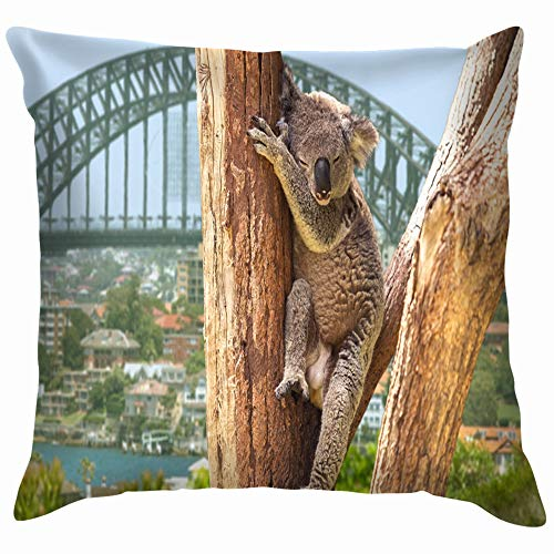 Cute Koala Sydney Australia Animals Wildlife Nature Pillow Case Throw Pillow Cover Square Cushion Cover 22X22 Inch (Furniture Outdoor Sydney Nsw)