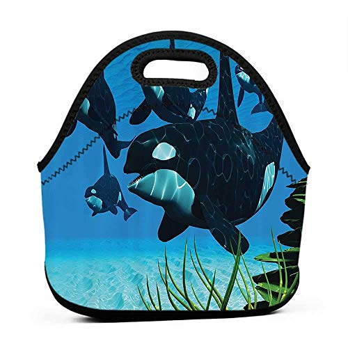 Large Size Reusable Lunch Handbag Whale Decor Collection,A Pod of Killer Whales Swim Along a Reef Looking for Fish Prey in Ocean Picture Print,Blue,lunch bag for toddler girl