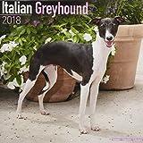 Italian Greyhound Calendar - Dog Breed Calendars - 2017 - 2018 wall Calendars - 16 Month by Avonside