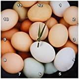 3dRose dpp_11391_1 Wall Clock, Chicken Eggs, 10 by 10-Inch Review