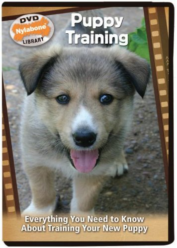 Puppy Training: Everything You Need to Know About Training Your New ()