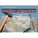 Fossilien präparieren: Schritt für Schritt