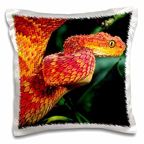3dRose African Bush Viper snake-NA02 DNO0446-David Northcott Pillow Case (Bush Viper)