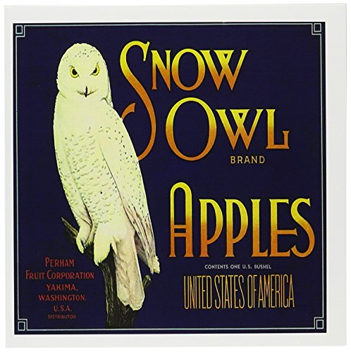 3dRose Snow Owl Brand Apples Washington with White Snow Owl on a Branch - Greeting Cards, 6 x 6 inches, set of 6 (Snow Branch)