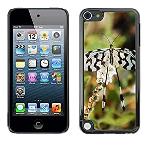 Super Stella Slim PC Hard Case Cover Skin Armor Shell Protection // M00144628 Butterfly Insect Black White Pattern // Apple ipod Touch 5 5G 5th